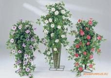 Ампельные растения